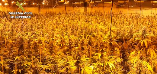 Plantación 'indoor' de marihuana desarticulada por la Guardia Civil en Luque (FOTO: Guardia Civil)
